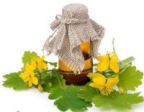 Чистотел — целебные свойства и его применение в лечебных целях